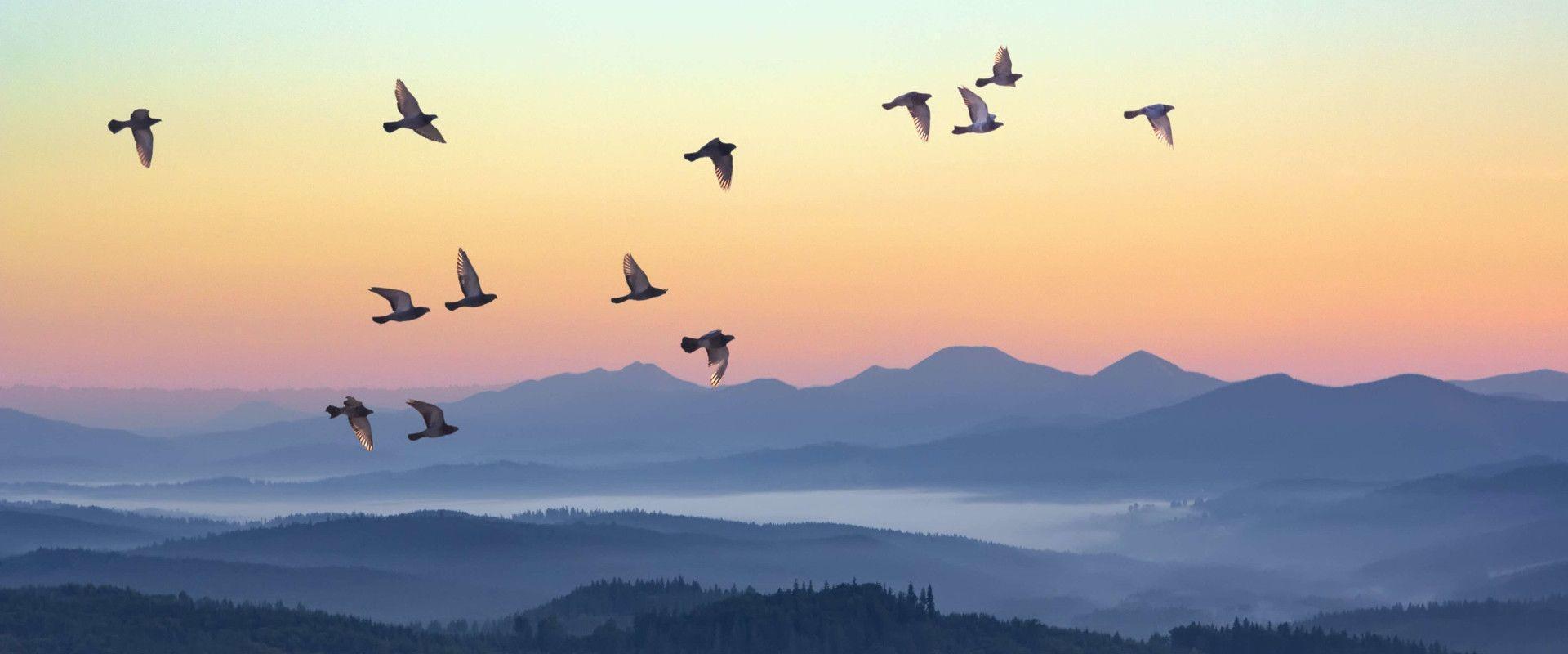Des oiseaux s'envolent, pour illustrer l'envol du patient