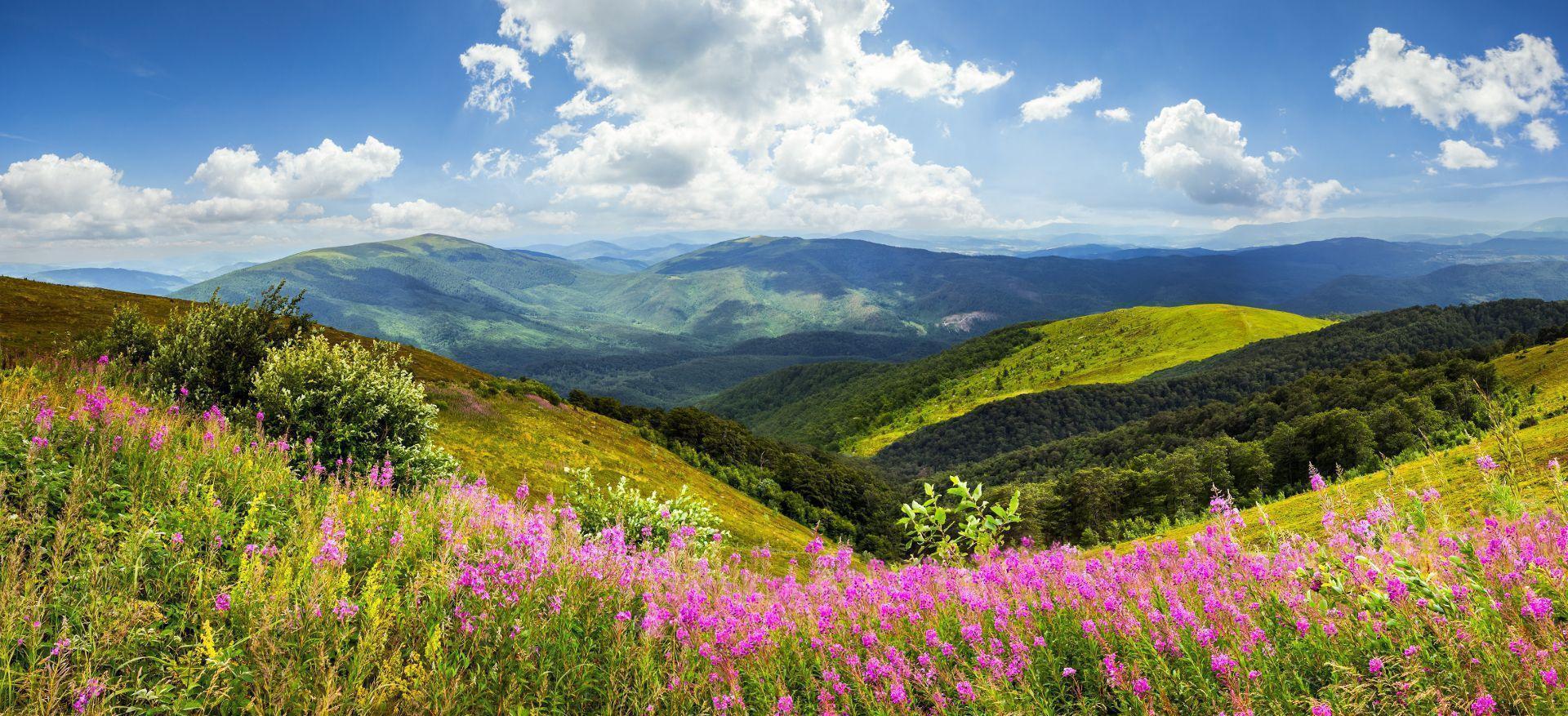 Un paysage apaisant, métaphore de la thérapie